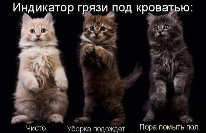 Prikolnyie_kartinki_23.01.2012_3 (700x455, 45Kb)