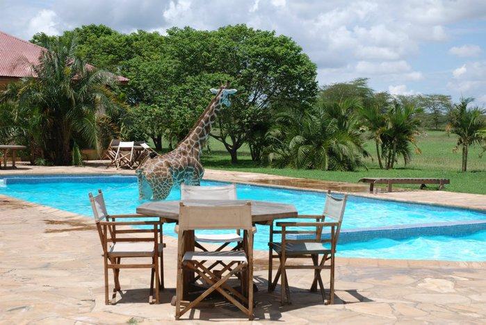 жираф фото 2 (700x468, 93Kb)