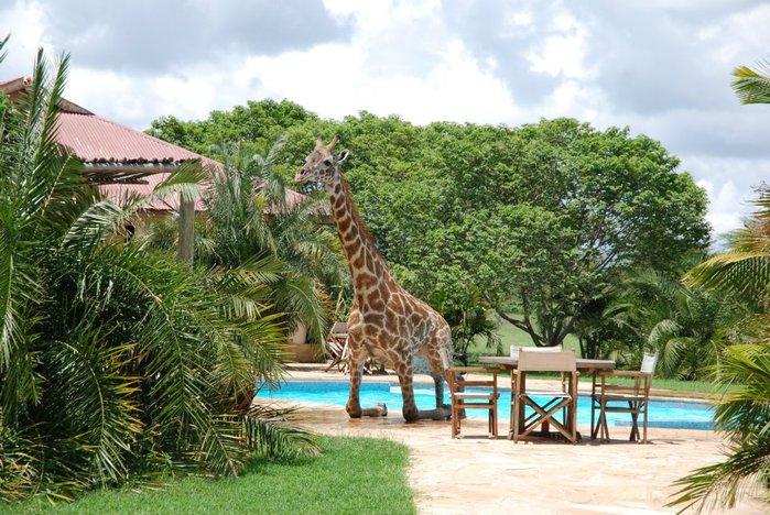 жираф фото 5 (700x468, 110Kb)