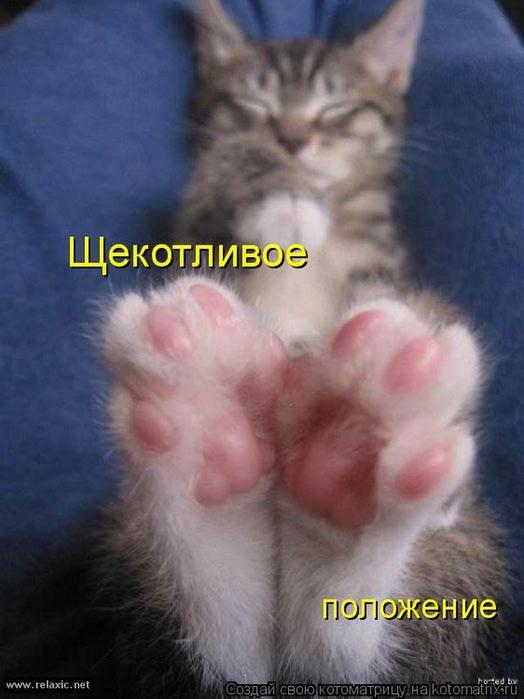 4080226_kotomatrix_063 (524x700, 42Kb)