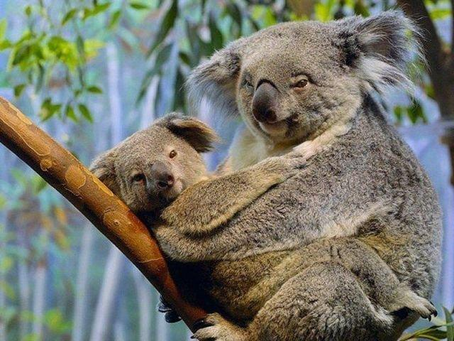 83517435_3821971_fun_animals_34 (640x480, 71Kb)