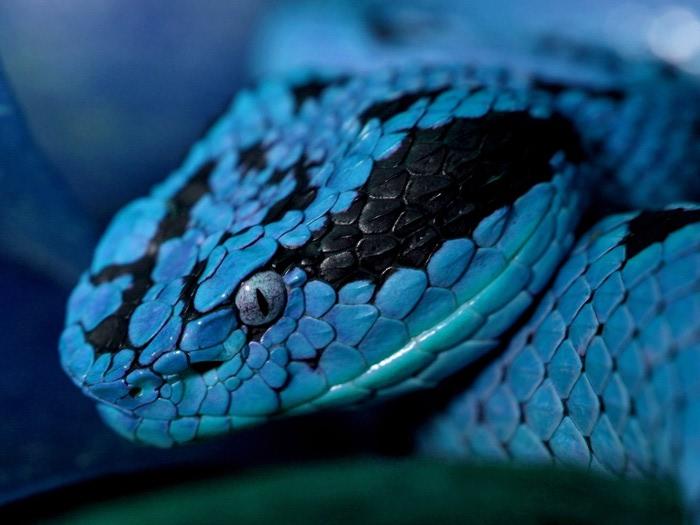 Snake (700x525, 77Kb)