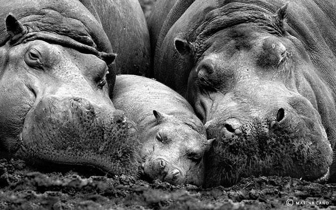 прикольные фото животных Marina Cano 1 (670x418, 102Kb)