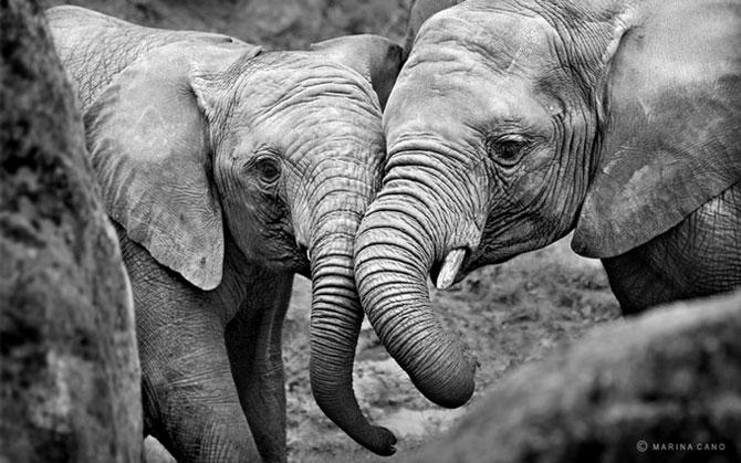 прикольные фото животных Marina Cano 5 (670x419, 74Kb)