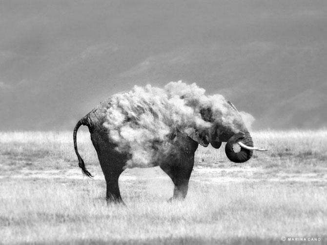 прикольные фото животных Marina Cano 7 (670x502, 44Kb)