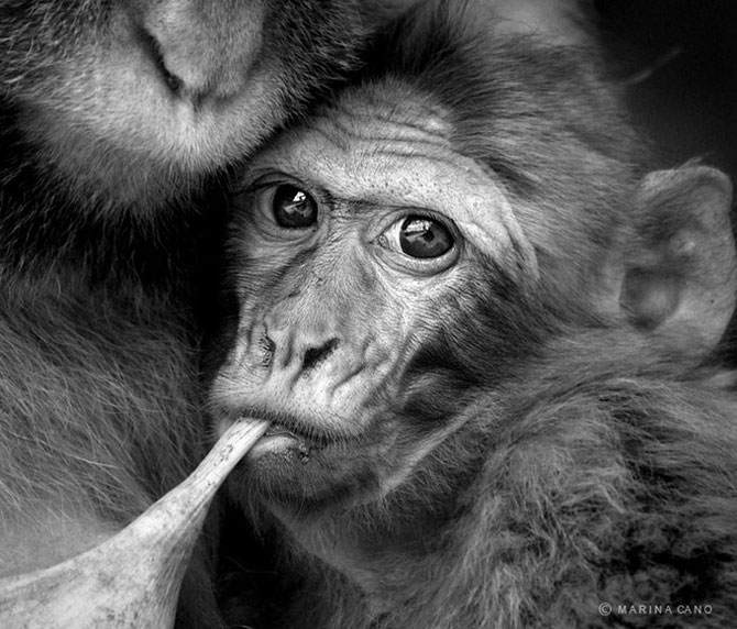 прикольные фото животных Marina Cano 9 (670x572, 91Kb)
