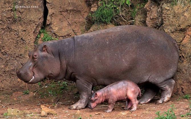 прикольные фото животных Marina Cano 11 (670x419, 96Kb)