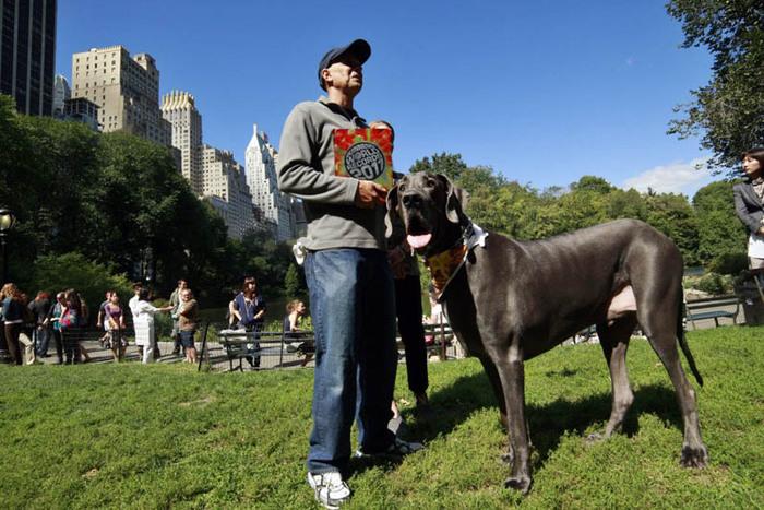 самая большая собака (700x467, 140Kb)
