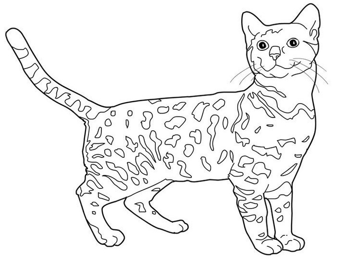 cats_coloring_pages_bengal (700x525, 73Kb)