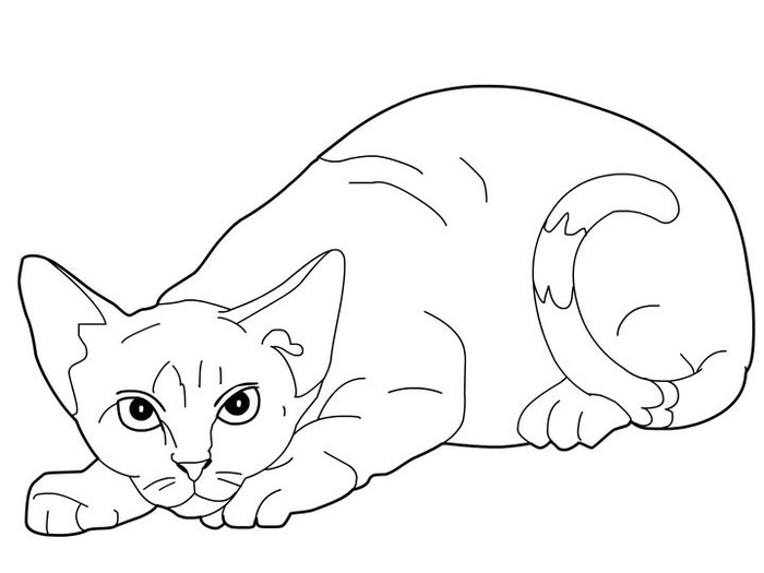 cats_coloring_pages_devon-rex (700x525, 44Kb)