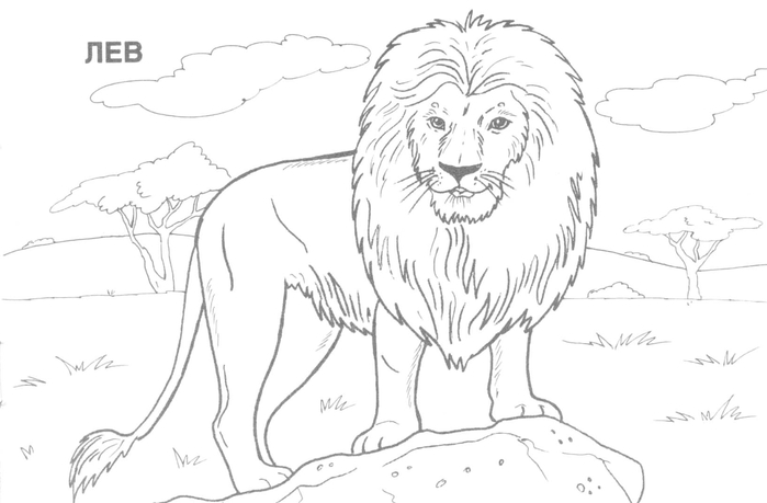 wild_animals_coloring_pages_401 (700x459, 105Kb)