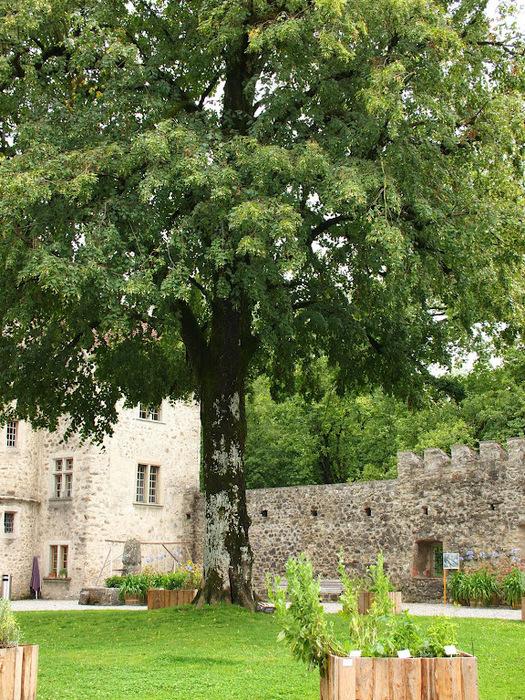 Замок Хальвиль (Schloss Hallwyl) 51036