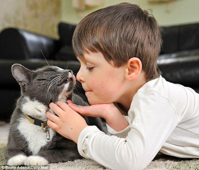 лечебные возможности кошек 2 (700x599, 60Kb)