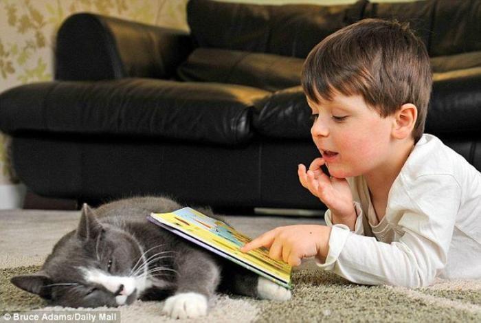 лечебные возможности кошек 4 (700x470, 47Kb)