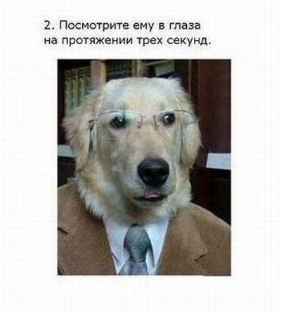 fokus_dnja_3_foto_2 (400x446, 23Kb)