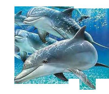 4761150_delfini (377x325, 209kb)
