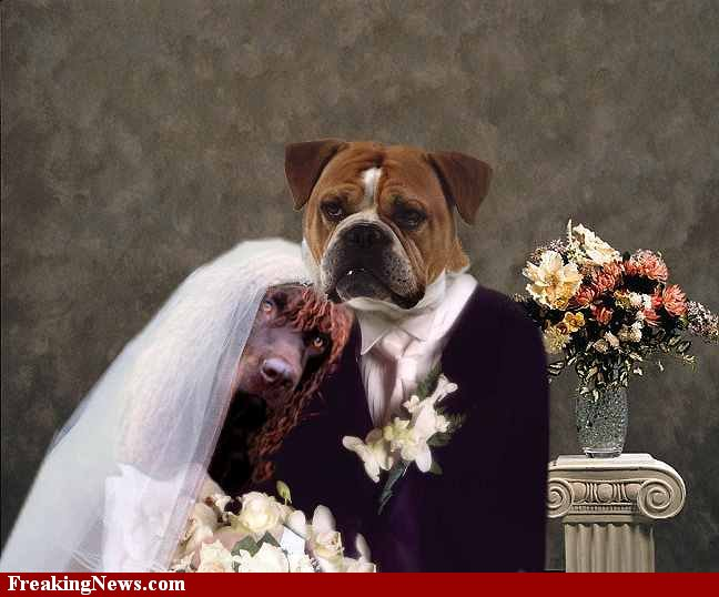 Dog-Wedding-23143 (648x538, 57Kb)