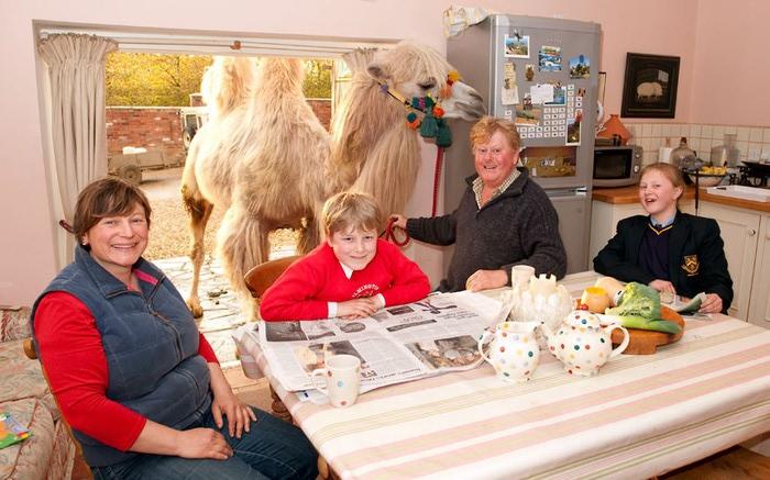 верблюды в городе фото 4 (700x437, 103Kb)