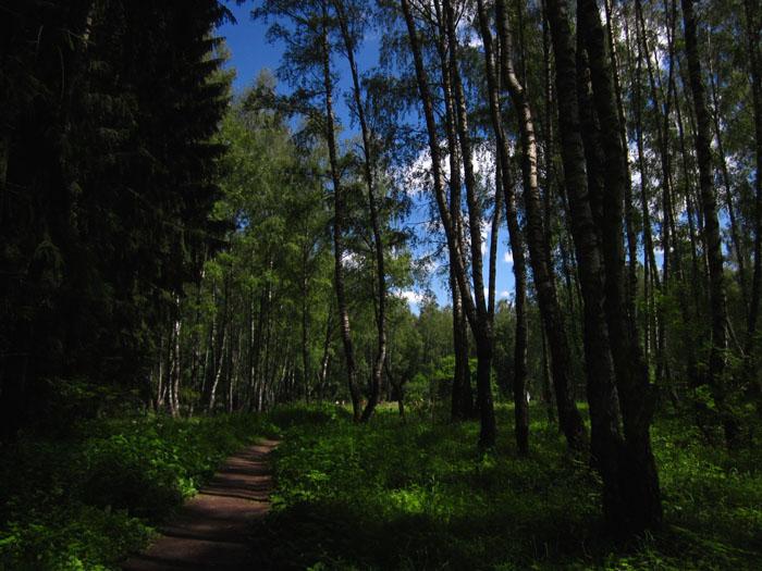 лес 02 (700x525, 134Kb)