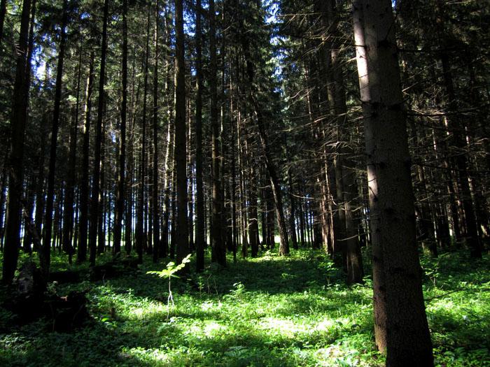 лес 04 (700x525, 194Kb)