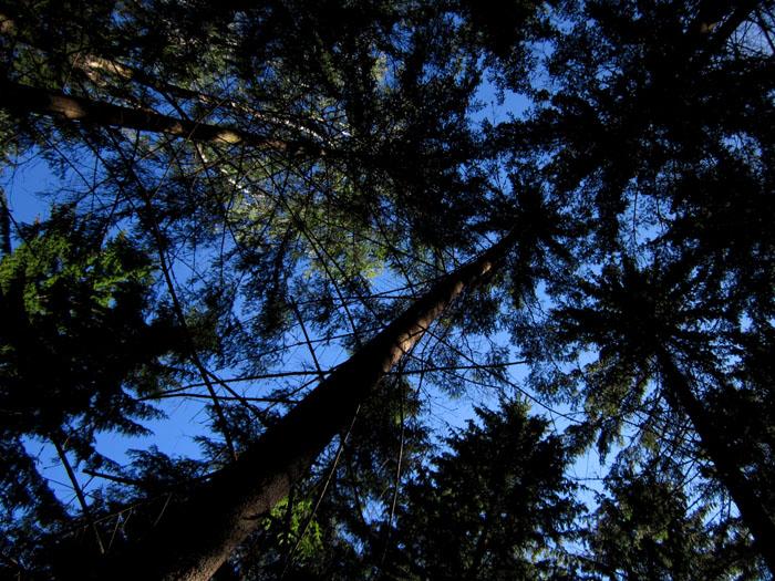лес 06 (700x525, 197Kb)
