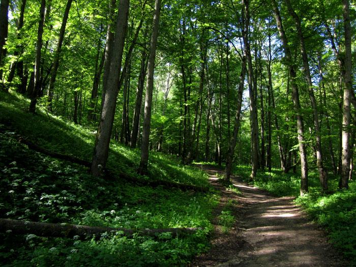 лес 08 (700x525, 212Kb)