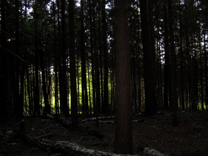 лес 11 (700x525, 116Kb)