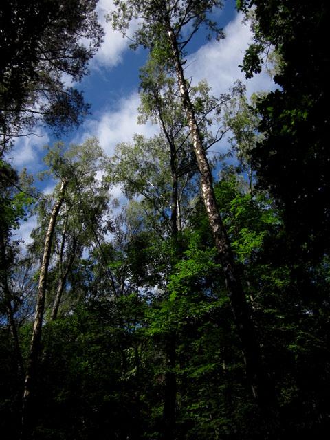 лес 13 (480x640, 140Kb)