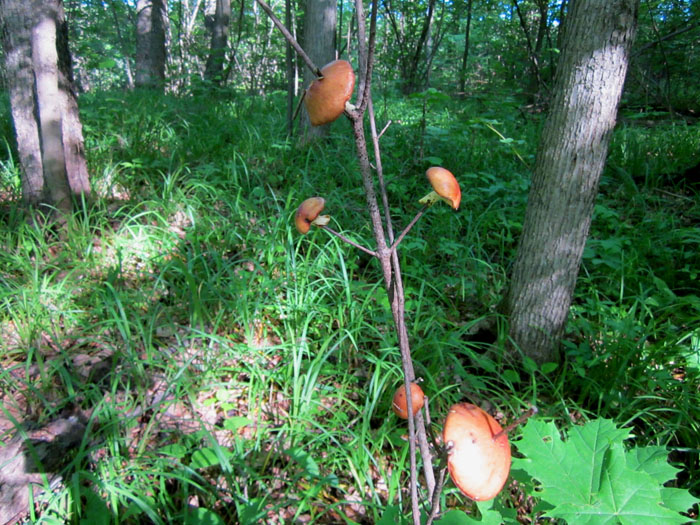 лес 15 (700x525, 190Kb)