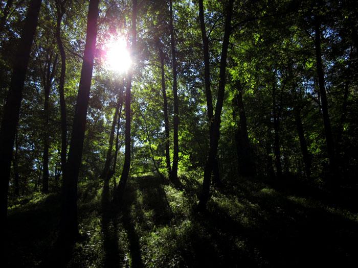 лес 24а (700x525, 152Kb)