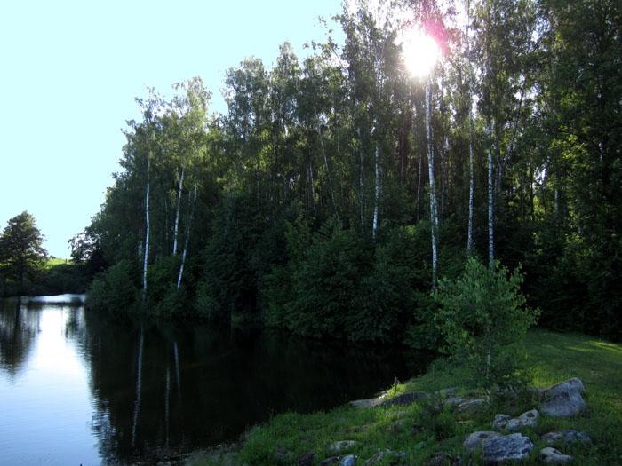 лес 25 (700x525, 128Kb)