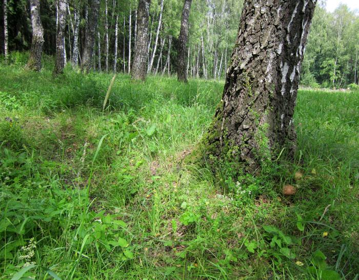 лес 27 (700x547, 220Kb)