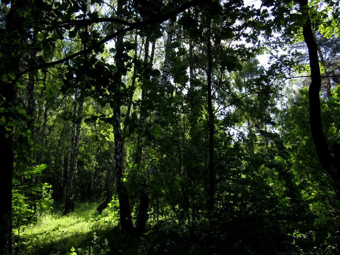 лес 29 (700x525, 203Kb)