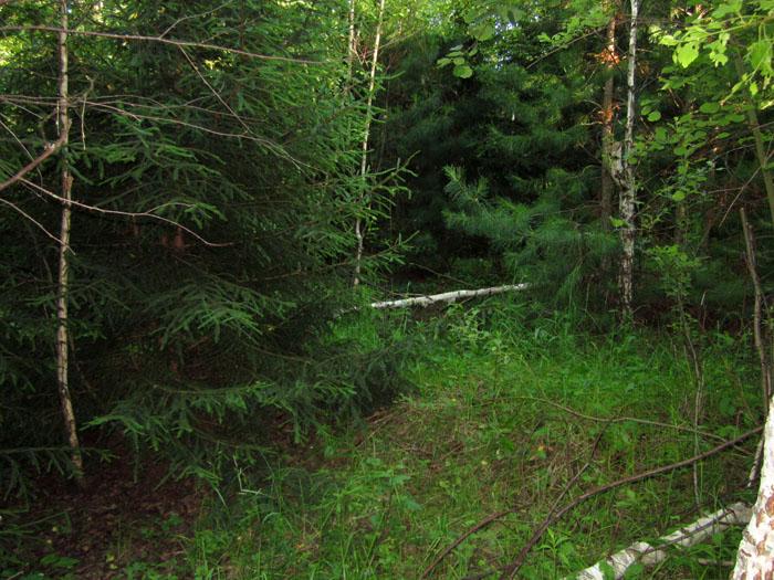 лес 34 (700x525, 172Kb)