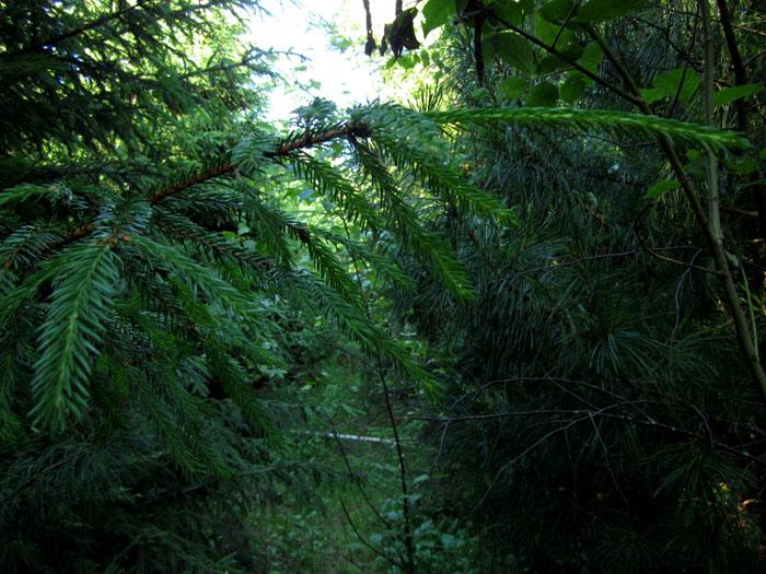 лес 36 (700x525, 163Kb)