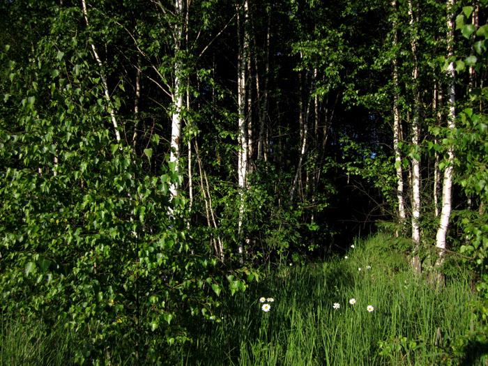 лес 38 (700x525, 225Kb)