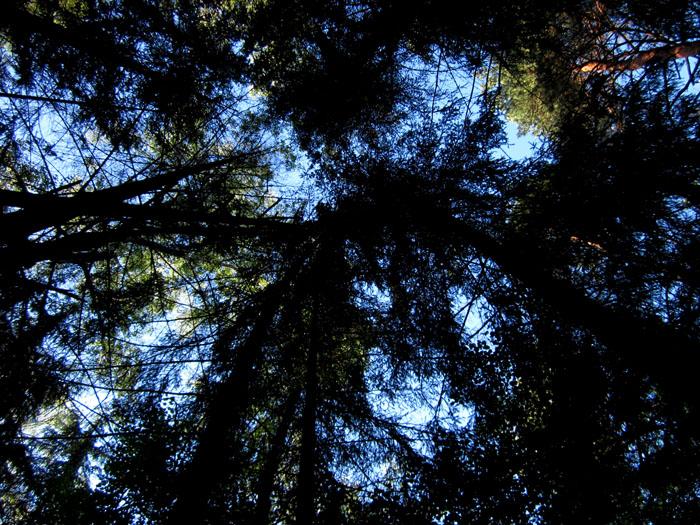 лес 43 (700x525, 217Kb)