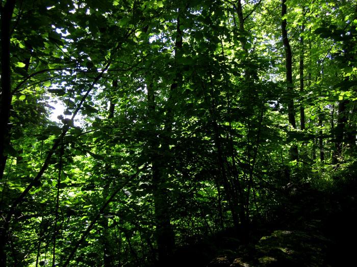 лес 47 (700x525, 216Kb)