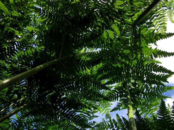 лес 51 (700x525, 200Kb)