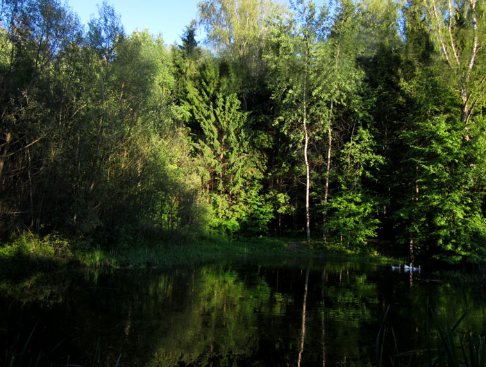 лес 55 (700x529, 172Kb)