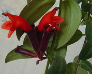 Необычные растения. Обсуждение на LiveInternet - Российский Сервис Онлайн-Дневников