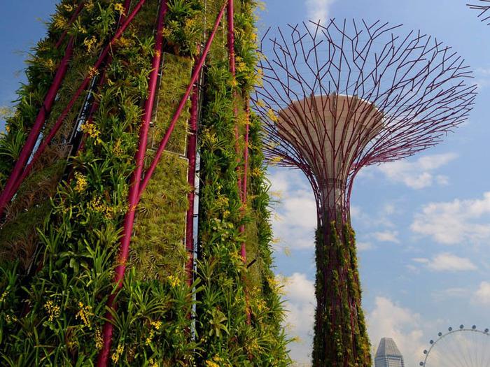 сады в сингапуре 5 (700x525, 212Kb)