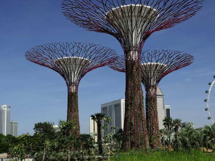 сады в сингапуре фото 2 (700x525, 157Kb)