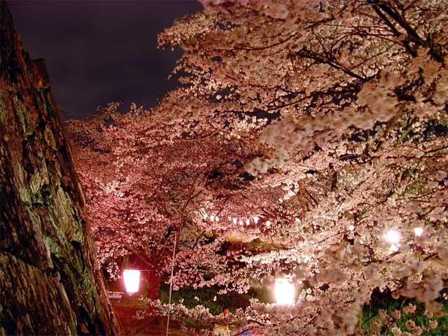 фото сакуры11 (640x480, 125Kb)