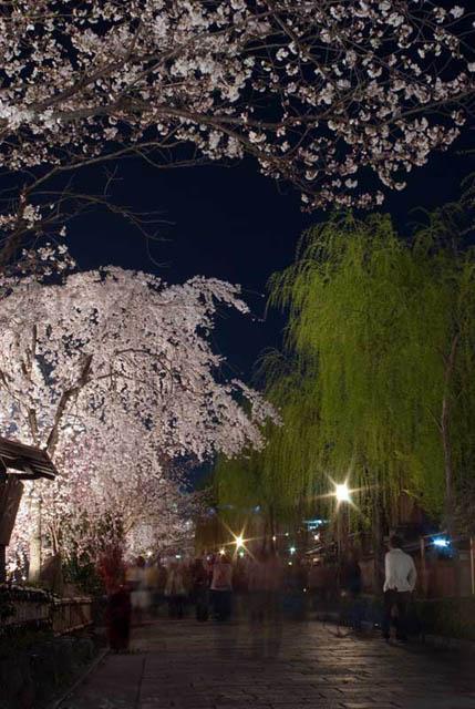 фото сакуры33 (429x640, 109Kb)