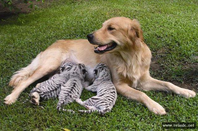 4833101_animals_106 (640x425, 80Kb)