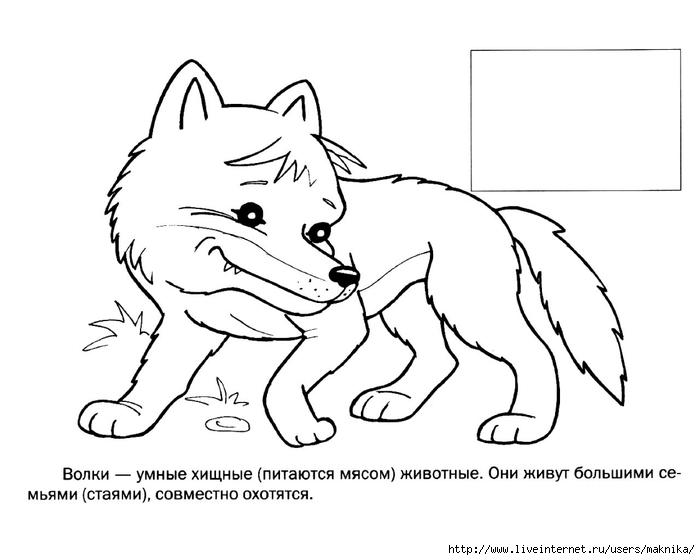 Раскраска для 3 класса животные