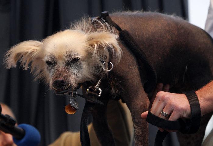 самые уродливые собаки фото 5 (700x479, 64Kb)