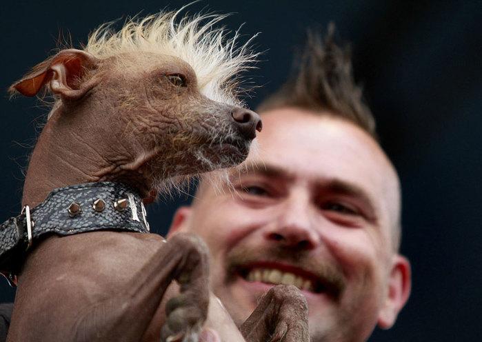 самые уродливые собаки фото 6 (700x496, 73Kb)