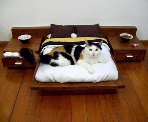 Подарки для кошек своими руками